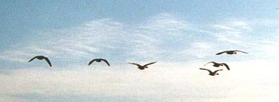 Flying Geese